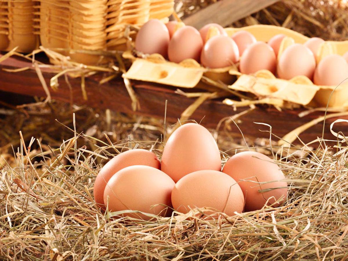 Eier - frisch und lecker
